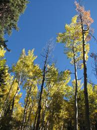 Aspen grove-small