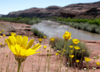 Flowers by San Juan River--Photo by PRB