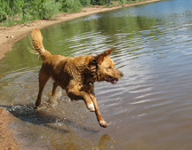 Jake jumps in lake