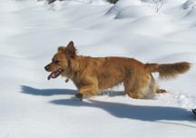Jake runs through snow
