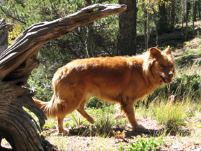 Jake the Hiking Dog--photo by Patrice Rhoades-Baum